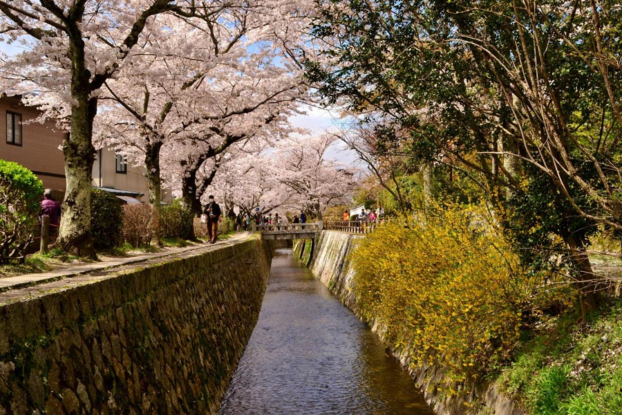 Philosopher's-Path-Kyoto-Cherry-Blossoms-1