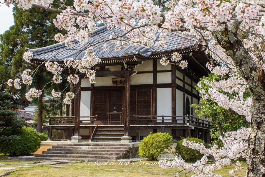 Shotendo-Hall-Daikakiju-Cherry-Blossoms-Kyoto