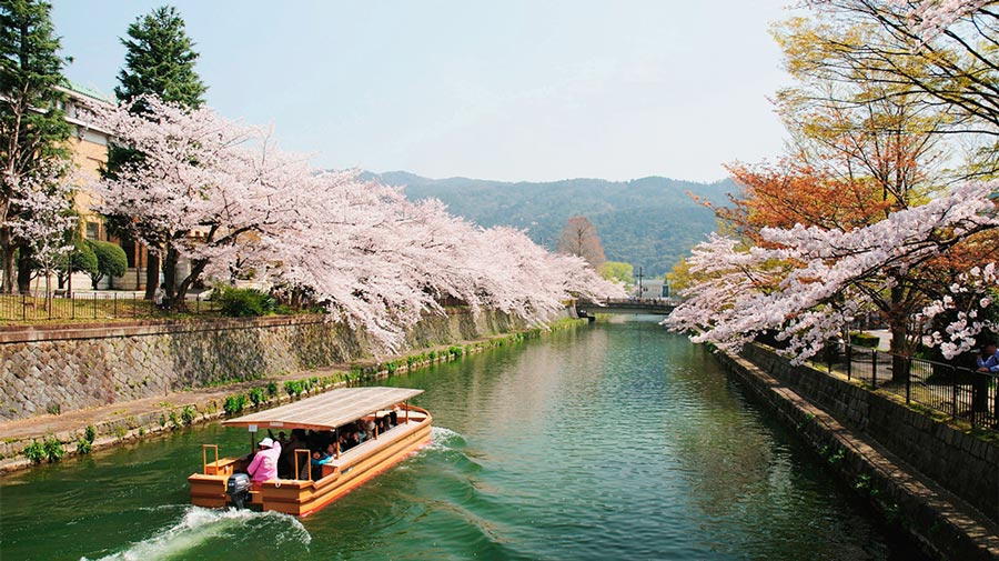 japanese-cherry-blossom-viewing-kyoto-japan