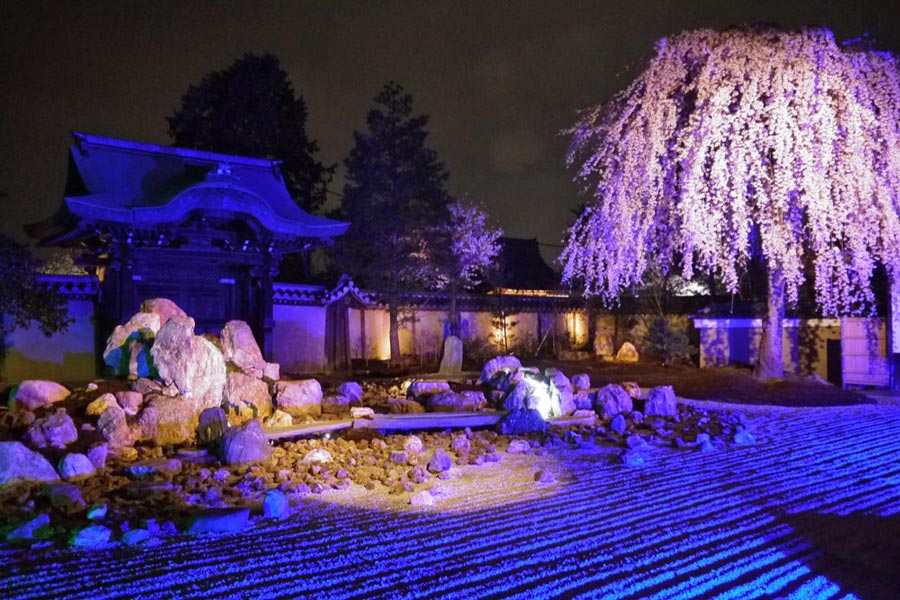 kodaiji-kyoto-cherry-blossoms-night-festiva;