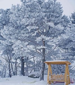 Pyeongchang is truly a winter wonderland Click on our biohellip