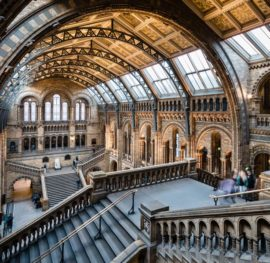 Review Of Natural History Museum London Travel Blog