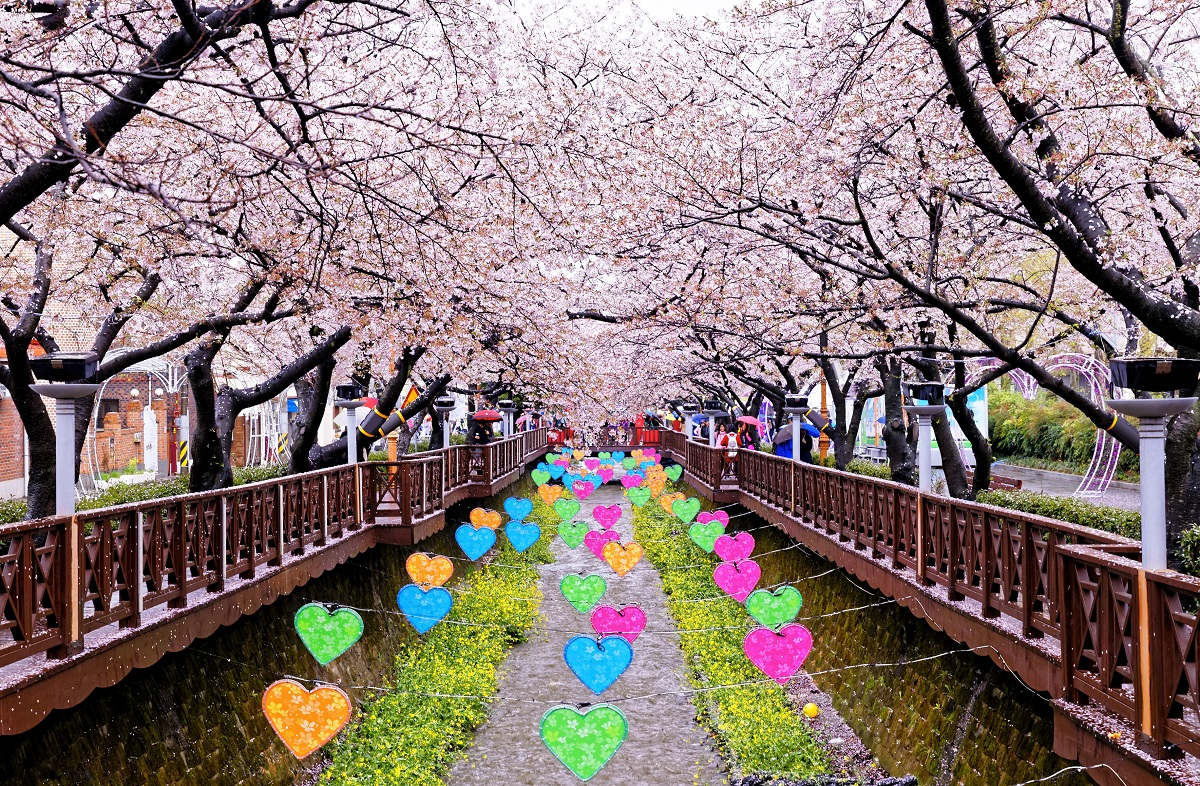 The 2017 Official Forecast For Cherry Blossoms In Korea